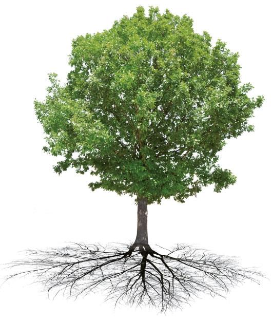 Erkrankt ein Baum, behandelt man die Wurzel